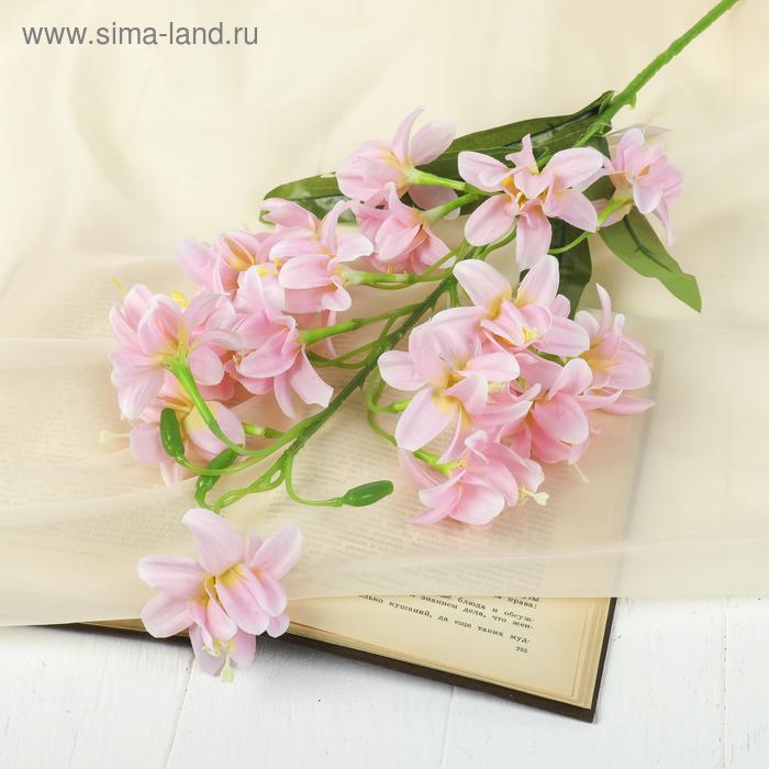 """Цветы искусственные """"Колокольчик скученный"""" 8*84 см, розовый"""