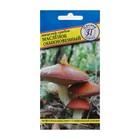 Мицелий грибов Маслёнок обыкновенный, 50 мл