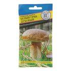 Мицелий Белый гриб дубовый, 50 мл