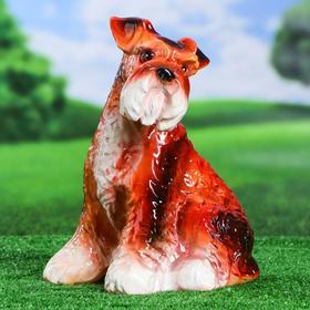 Садовая фигура 'Собака Шнауцер', глянец, коричневая, 34 см Ош