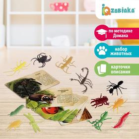 """Set of animals with flashcards """"In the world of insects"""", 12 animals, 12 cards"""
