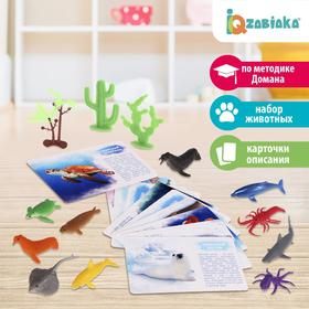 Набор животных с обучающими карточками «Подводный мир», животные пластик, карточки, по методике Монтессори