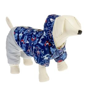 Winter jumpsuit for a pug/French.bulldog, boy, XL (DS 28-30cm, OG 50-52cm), mix