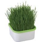 Проращиватель для зелёной травки