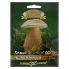"""Мицелий на компосте """"Белый гриб"""" Дубовый на зерновом субстрате, 15 мл"""