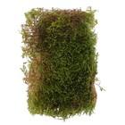 """Мох высушенный """" Кочка"""" в контейнере, 750мл, зелёный"""