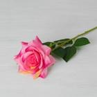 """Цветы искусственные """"Роза Портленд"""" 10*55 см, розовая"""