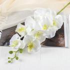 """Цветы искусственные """"Орхидея Изящная"""" 10*100 см, белая"""
