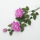 """Цветы искусственные """"Роза Прованс"""" 11*100 см, сиреневая"""