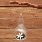 """Флорариум """"Лампа"""" d-5.5см, 10*18 см, с верёвкой"""