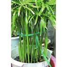 Лента для подвязки растений, длина 40 м, ПВХ