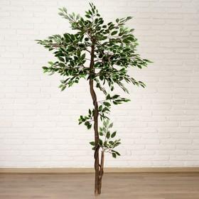Дерево искусственное 'Листья с белыми прожилками' Ош