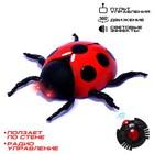 """Beetle on the radio """"ladybug"""" crawling on the wall"""