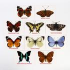 Обучающие карточки по методике Г. Домана «Бабочки», 10 карт, А6 - фото 105496621