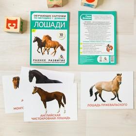 "Flashcards on methodology of G. Doman ""Horses"""