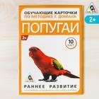 Обучающие карточки по методике Г. Домана «Попугаи», 10 карт, А6 - фото 105496630