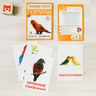 """Flashcards on methodology of G. Doman """"Parrots"""""""