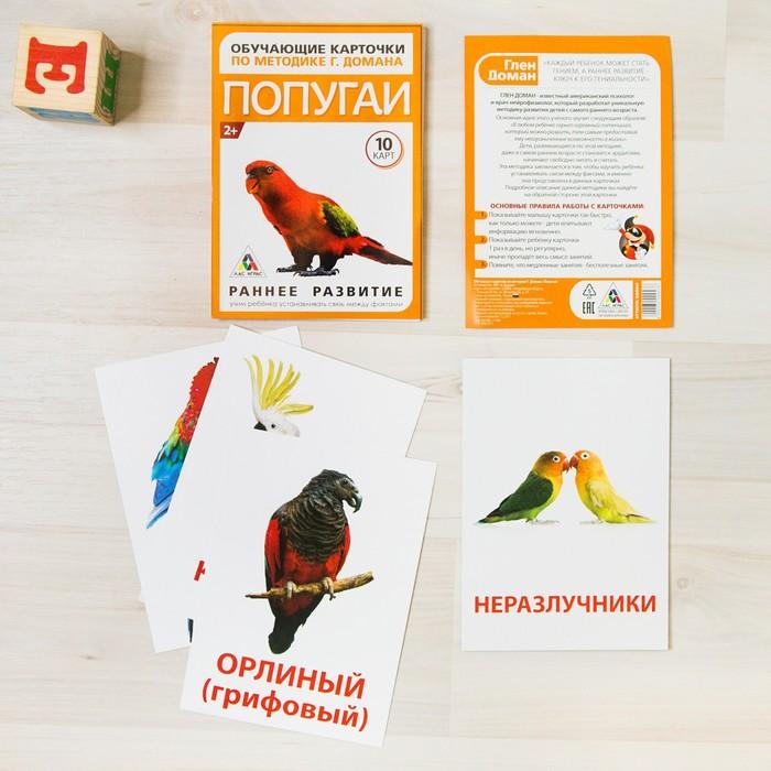 Обучающие карточки по методике Г. Домана «Попугаи», 10 карт, А6 - фото 105496629