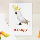 Обучающие карточки по методике Г. Домана «Попугаи», 10 карт, А6 - фото 105496631