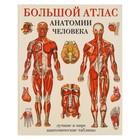 Большой атлас анатомии человека. Махиянова Е. Б.