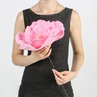 """Цветы для фотосессий """"Астра"""", розовые"""