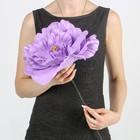 """Цветы для фотосессий """"Астра"""" сиреневая 30х30х40 см"""
