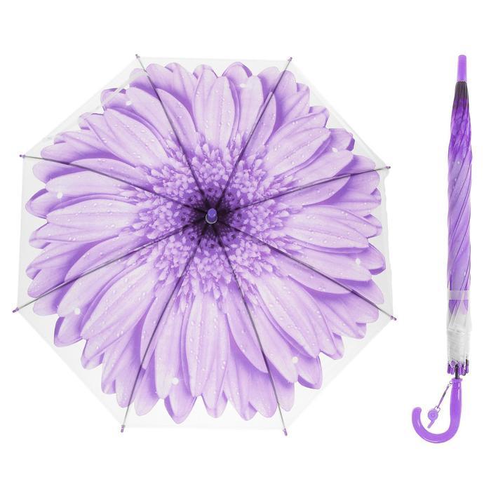 Зонт-трость «Гербера», полуавтоматический, со свистком, R=41см, цвет фиолетовый - фото 2087228