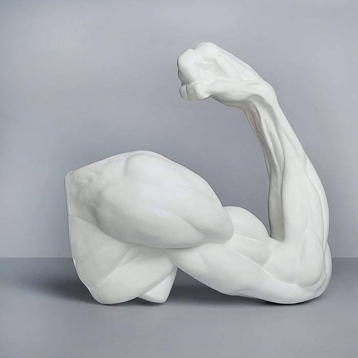 Гипсовая фигура, Рука. согнутая в локте «Мастерская Экорше», 36.5х14х41.5 см