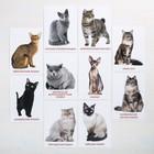 Обучающие карточки по методике Г. Домана «Кошки», 10 карт, А6 - фото 105496636