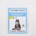 Обучающие карточки по методике Г. Домана «Кошки», 10 карт, А6 - фото 105496638
