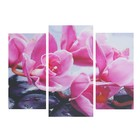 """Модульная картина """"Фиолетовая орхидея"""" 25*50 - 2 части, 30*60,  60*80 см"""