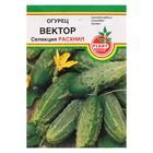 """Семена огурец """"Вектор"""", пчёлоопыляемый, 0,5 г"""