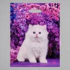 """Пакет """"Милый котик"""", полиэтиленовый с вырубной ручкой, 31 х 40 см, 60 мкм - фото 308517493"""