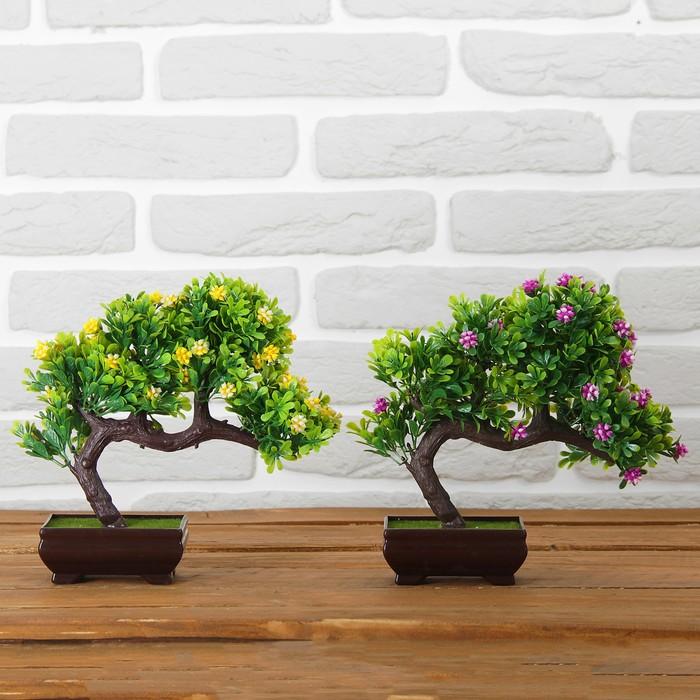 картинки бонсай микс дерево различные