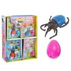"""Растущие игрушки """"Жук"""", в наборе яйцо: 2 × 3 см с динозавром, МИКС"""