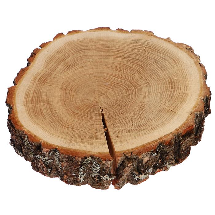 Спил дуба, шлифованный с одной стороны, 20-25 см, толщина 8-9 см, с корой