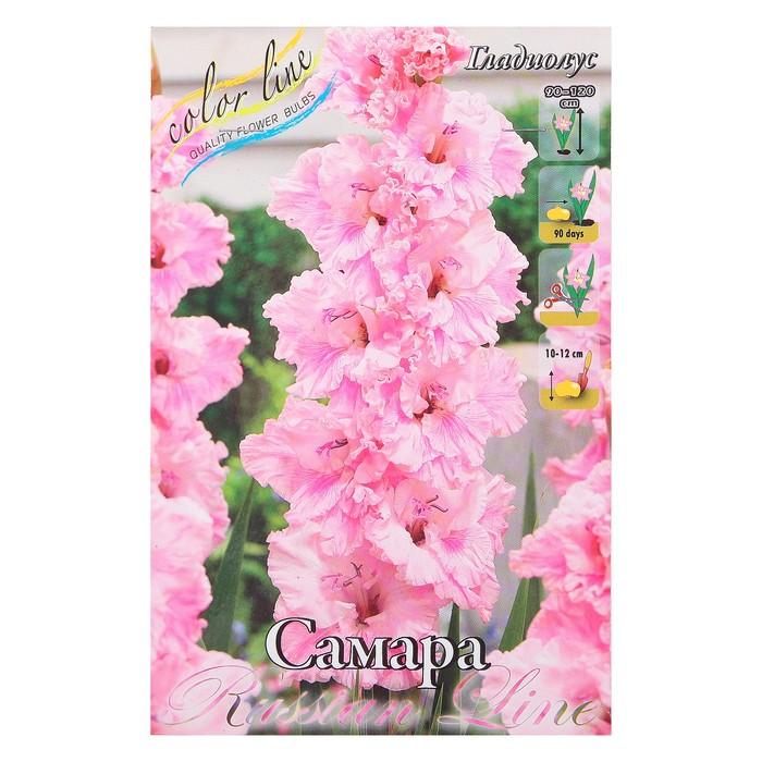 Цветов, где купить цветы гладиолусы в самаре