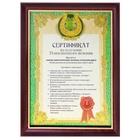 """""""Сертификат на получение пожизненного везения"""", в коричневой рамке с золотой каймой"""