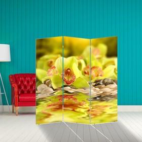 Ширма 'Орхидея в отражении', 160 × 150 см Ош