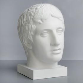 Гипсовая фигура, голова Дорифора «Мастерская Экорше», 21 х 29 х 35 см