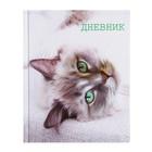 """Дневник для 5-11 класса """"Кошка"""", твёрдая обложка, глянцевая ламинация, 48 листов"""