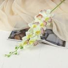 """Цветы искусственные """"Орхидея пышная"""" 9*87 см белая"""