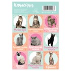 """Stickers with coloring on the back of """"Cats"""", 11 x 16 cm"""