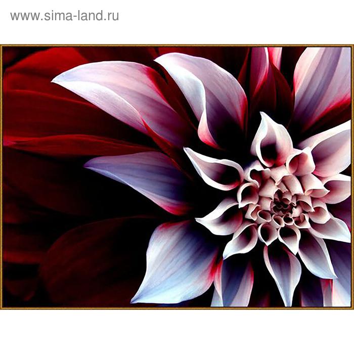 """Алмазная мозаика """"Георгин"""", 27 цветов"""