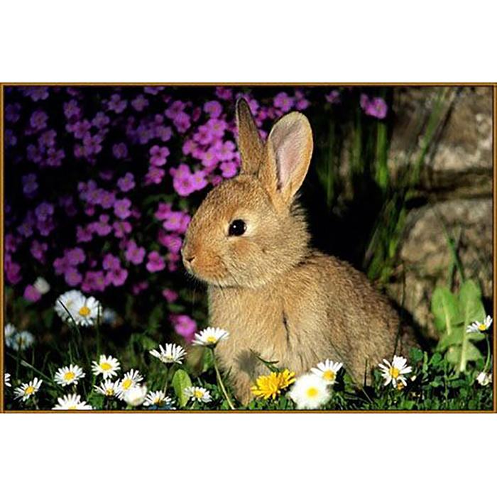 """Алмазная мозаика """"Кролик в ромашках"""", 20 цветов"""