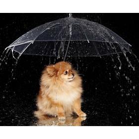 """Зонт для животных """"Дружок"""", d=76 см"""
