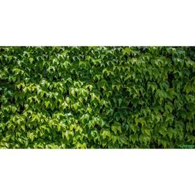 Фотосетка, 250 × 158 см, с фотопечатью, люверсы шаг 1 м, «Виноградная стена»