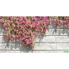 Фотосетка, 250 × 158 см, с фотопечатью, «Стена с цветами»
