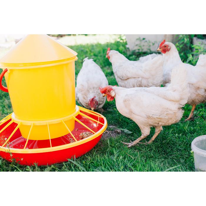 кормушки для цыплят бройлеров фото краевой