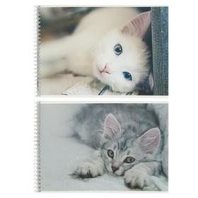 Альбом для рисования А4, 48 листов на гребне «Спящие кошки», обложка мелованный картон, ВД-лак, тиснение «лён», блок 100 г/м2, МИКС